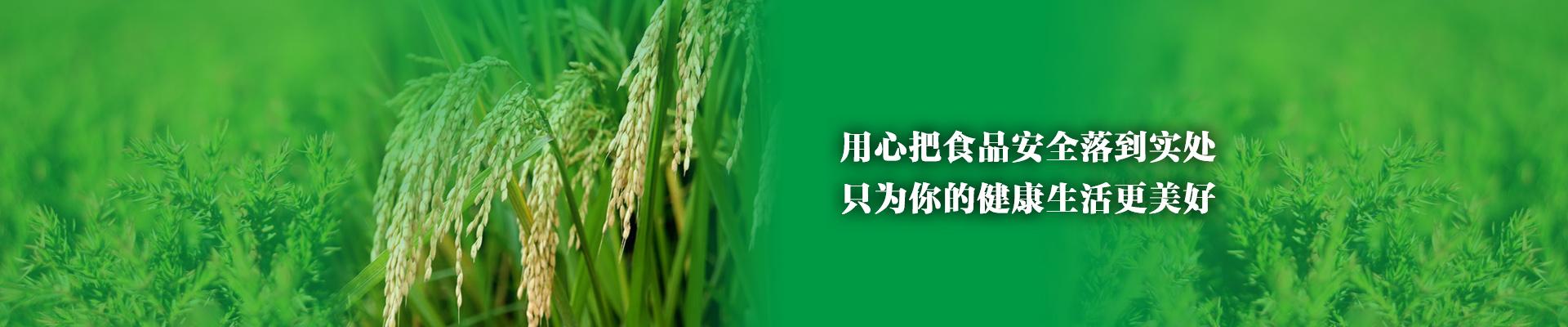 水稻gus染色步骤